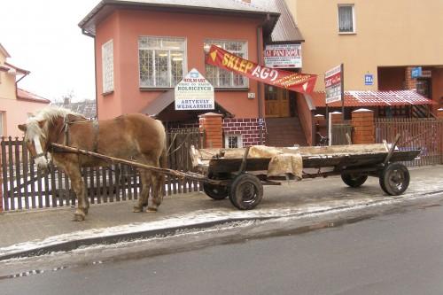 Wlodawa cheval.JPG