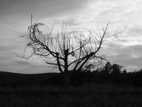 fond-ecran-arbre-mort-52.jpg