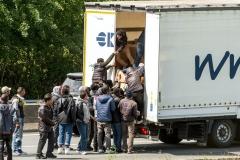 7779174715_migrants.jpg